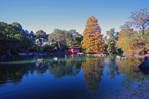 auburn sydney japanese garden australia nsw reflection