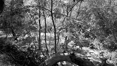 A Bit of Bottom Forest