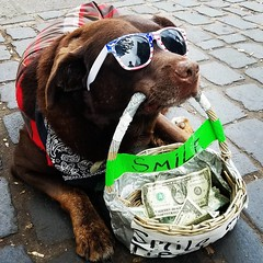 When you think you're hustling hard, and then you see this #dog making mad #cash on the #streets of #portland #pdx #survivalbros dot com and on #YouTube