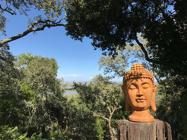 Buddhas  thinks