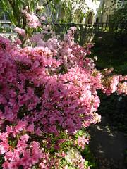 Planting Fields Arboretum - Oyster Bay (42)