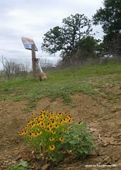 on a hillside