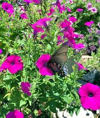 063e ~ Butterfly