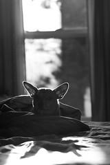 RudyIn the Sunlight