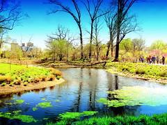 Water Garden. Pond