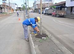Reiniciaron los trabajos de instalación eléctrica en el parterre central de la avenida 14 de Agosto de Chone