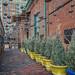 The Distillery Historic District Alley (Toronto, Ontario) by Kᵉⁿ Lᵃⁿᵉ