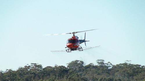 aerial spraying of bitou bush