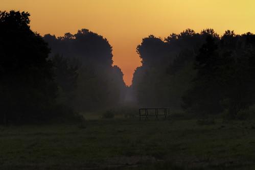 80d canon ef100400mmf4556lii eos morning naturalbeauty naturallight nature outdoor sunlight sunrise tarkington texas topazlabs fog