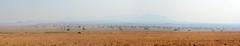 Hazy savannah landscape