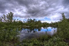 Wetlands, Magnuson Park, Seattle