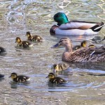 Out with the family at WWT