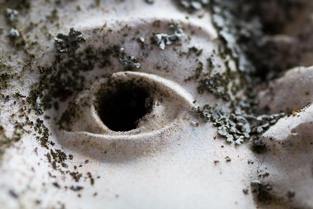 Eye, Canon EOS 70D, Tamron 90mm f/2.8