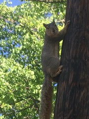 Squirrel on the pole