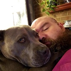 ❤💛💚💙💜 #bonnie_blue_staffy #bonnie_blue_bullie #staffysofinstagram #pitbullsofinstagram #dogsofinstagram #showmeyourpitties #dontbullymybreed #endbsl #dogstagram #doglove #dogsofinstaworld #adoptdontsh