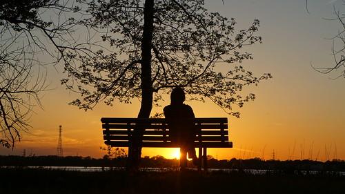 sunset bench silhouette sun landscape hbm 7dwf tree sonyflickraward