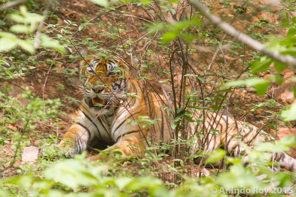 Ranthambore Tiger Santuary