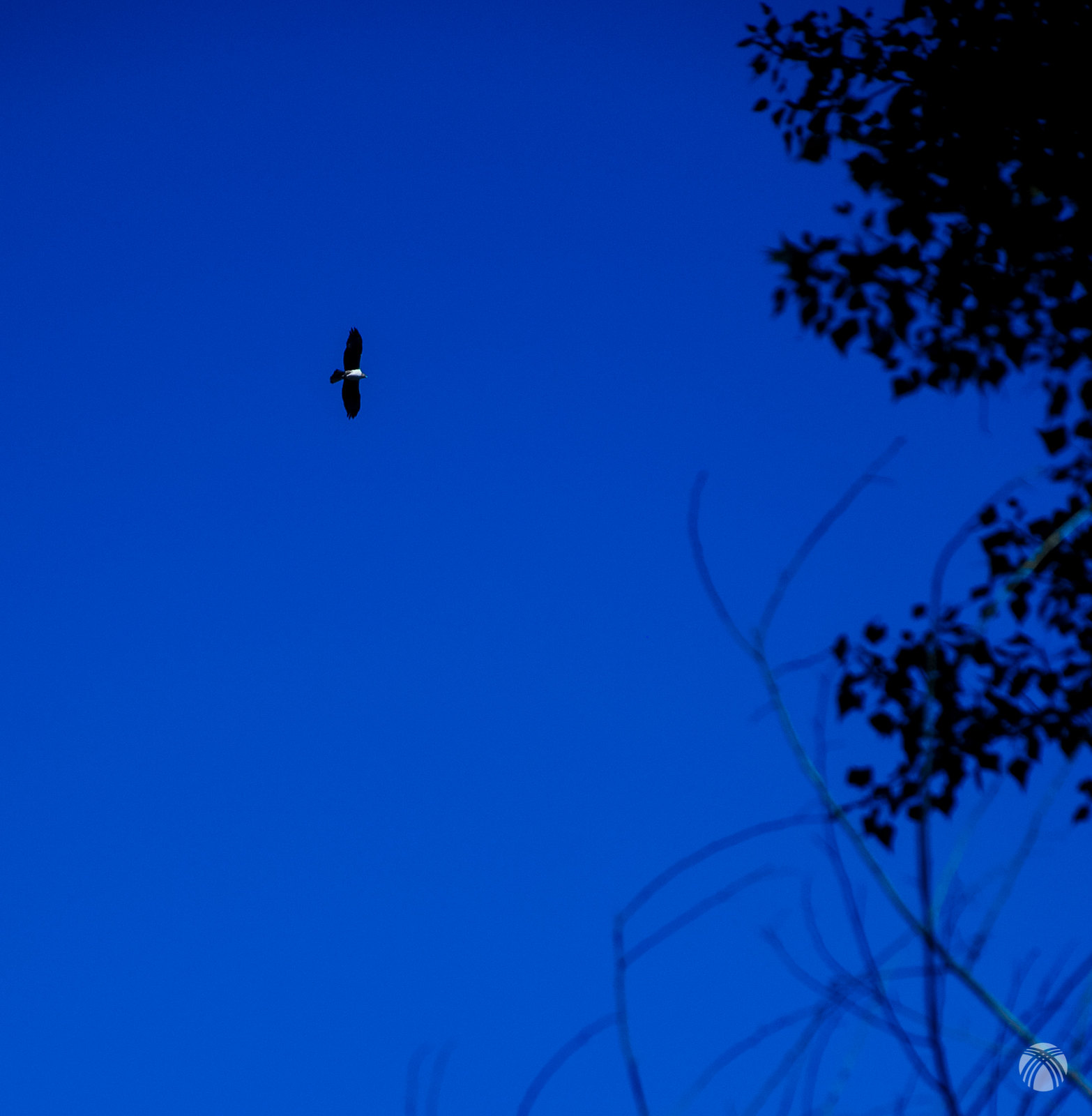 Un águila sobrevuela Parolís