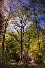 Dreaming forest path - Photo of Jailly