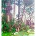 Botanical Gardens... by LukeDaDuke