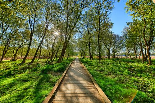 minnetonka minnesota unitedstates us mn glen lake kinsel park green grass trees sky blue sun rise morning canon eos 5ds r 5dsr rokinon 14mm 28 nature landscape hdr sns