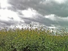 Under stormy skies