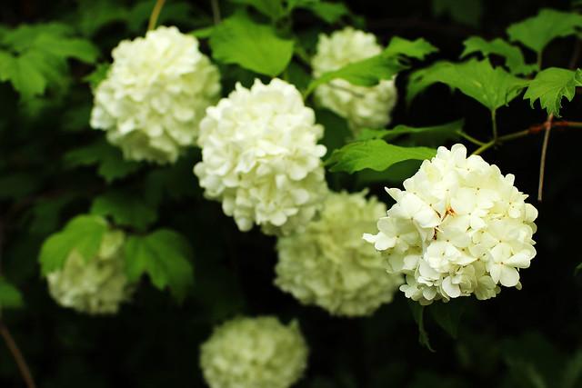 white bokeh