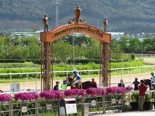 釜山慶南競馬場のはなみちから馬場に出る馬