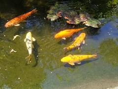 Sunken Gardens St Pete