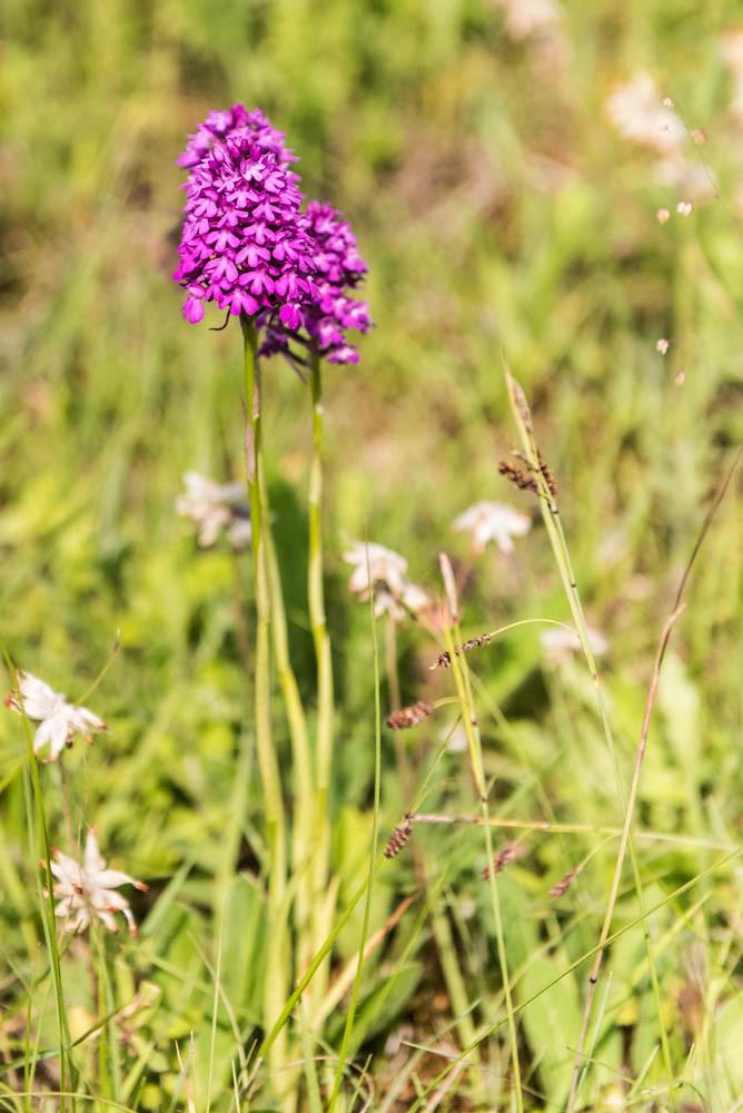Orchideenwiese_056