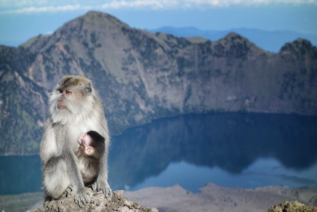 Rinjani - Jour 2 - Crater - Monkey 3