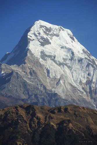 annapurnasouth montagnes nepal