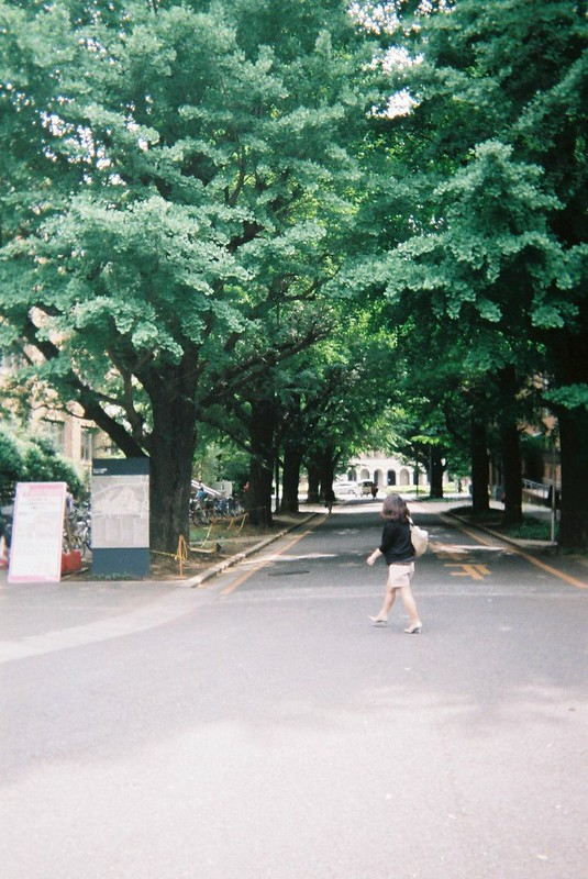 本郷写ルンです東大赤門前の街路樹