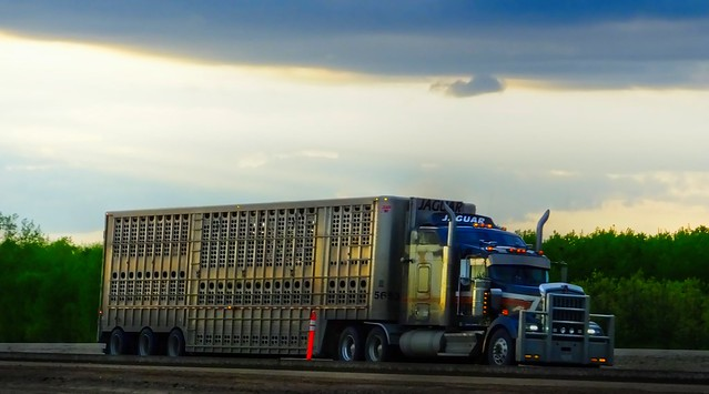 Big Wheels Rollin' on The Trans Canada Highway in Eastern Manitoba