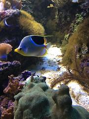 butterflyfish - 1 (2)