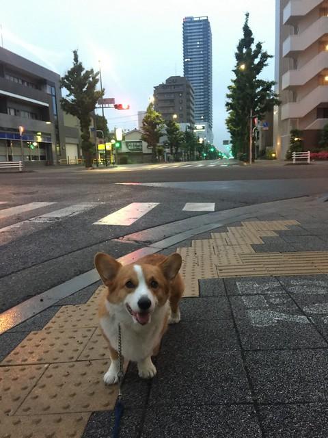 EIN 雨降ってきた〜びちょびちょ(T-T)