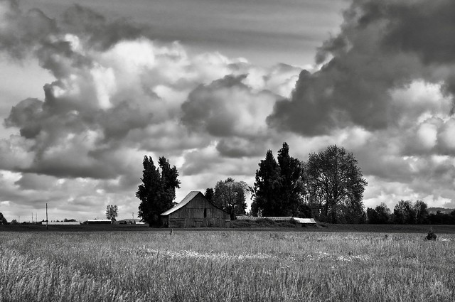 Old Barn in a Field (Black & White)