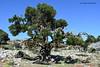 Mons-Tree!!
