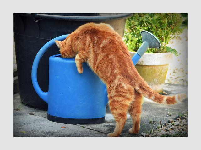 Bistrot de campagne pour chat assoiffé !