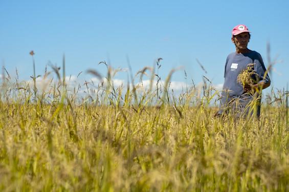 Agricultura familiar: políticas públicas e a alimentação saudável nas escolas