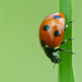 365 - Image 169 - Ladybird... by Gary Neville