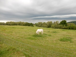 Horse, view, approaching storm