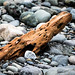 Small photo of Drift Wood