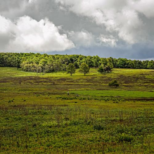 grass usa peoplephotography landscape virginia candid nature bigmeadows cloud sky shenandoahnationalpark panorama meadow tree mountain cloudy