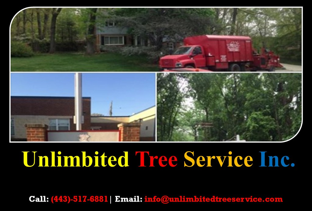 Tree Care and Tree Removal & Trimming Service in Annapolis, MD