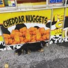 While some wild animals hunt their prey, Buster drags me to the nearest cheddar nugget truck.