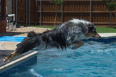 JJ Showing off his diving form...