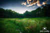 Early June in the Meadow | Ohio Nature Photography by Jim Crotty