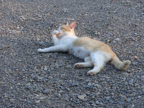 Waif Kittens 7 Weeks 12-Jun-2017