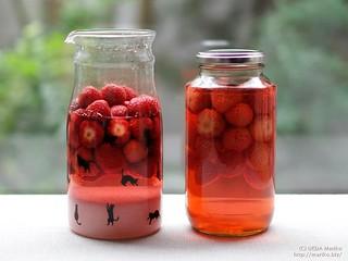 苺酵母・シロップ 20170515-20-DSCT9896 (2)-1